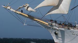 Tall Ships Race, Dar Mlodziezy från Polen