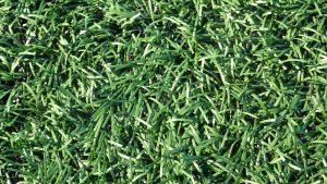 Närstudie i konstgjort gräs
