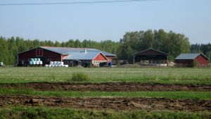 Jordbruk i Bennäs.