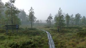 Kurjenrahka nationalpark
