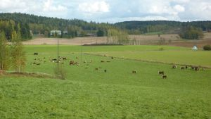 Kor i Nummi-Pusula.