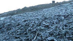 Avfallsberget täcka bl.a. av 60 cm däckflis. Längre bort syns ytskiktet med jordmån.