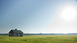 Du som konsument har makt att avgöra vad de finländska bönderna ska satsa på. Bild: Yle/Marcus Nordström