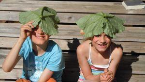 rabarberblad som solskydd