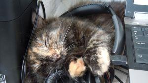 katt som sover på ett par hörlurar