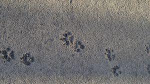 Kattavtryck i betong