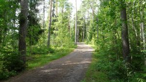 Jonasbackens skog i Borgå