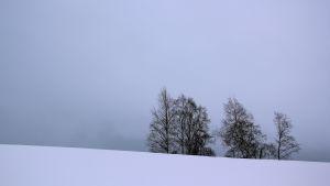 Snötäcke över åkermark.
