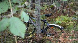 dumpad cykel i skog
