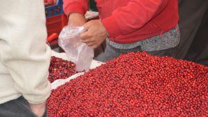 Lingon på Ekenäs höstmarknad