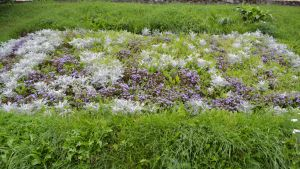 borgåvapnet och årtalen i blommor på åstranden i borgå