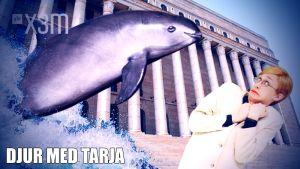 Djur med Tarja: Kaliforniatumlare