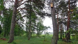 linnunpönttöjä metsässä