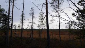 metsä- ja suomaisema Sodankylässä