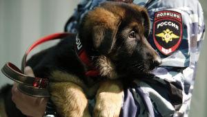 En ny polishund som Frankrike fick av Ryssland efter terrorattacken