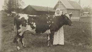 I.K.Inhan valokuva, jossa tyttö ja lehmä torpan edessä