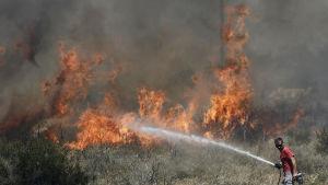 En volontär försöker släcka en skogsbrand i förorten Ilioupoli i Aten.