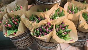 Tulppaaneja kukkakaupassa. ( Plantagenissa)