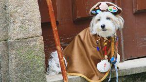 Koira pyhiinvaellusmatkalla