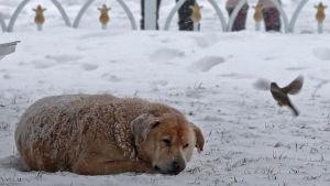 Också djuren fryser i snöigt Istanbul.