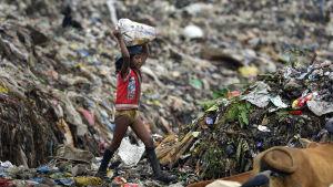 Sydasien med 620 miljoner barn är det värsta området för barn. Den här flickan arbetar vid en avstjälpningsplats  i delstaten Assam i Indien