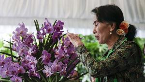 Aung San Suu Kyi beundrar en orkidé som döpts efter henne under ett besök i Singapore 1.12.2016