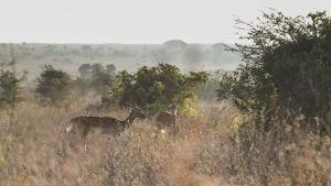 Nairobin kansallispuisto