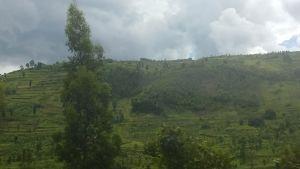 Rwandas kullar