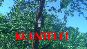 linnunpönttö puussa