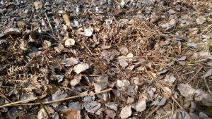kuivia lehtiä ja ruohoa maassa