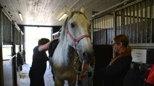 häst visar tungan