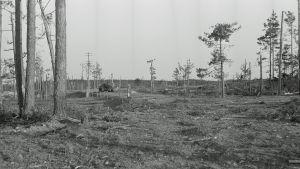 Panssarinyrkillä tuhottu KV-panssarivaunu Ihantalassa.