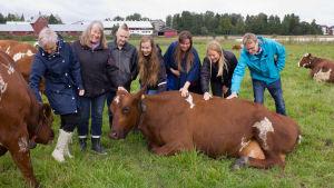 Iiris-lehmä Viikissä