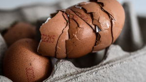Söndriga äggskal staplade på varandra i en äggkartong i Dresden, Tyskland. Den tyska livsmedelskedjan Aldi meddelade att de återkallar alla ägg från sina butiker i hela Tyskland som en säkerhetsåtgärd efter fipronilupptäckter i nederländska ägg.