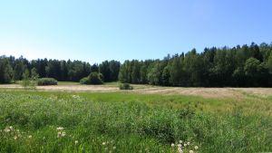 En äng och skog i Hammars.