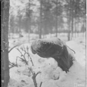 21.1.1940 Nälkään kuollut vihollisen hevonen Ruhtinaanmäellä.