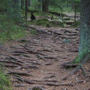 Juurakkoinen metsäpolku