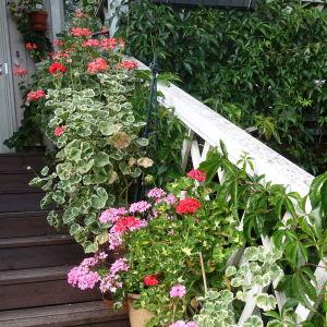 Blommor som står längs med en trappa.