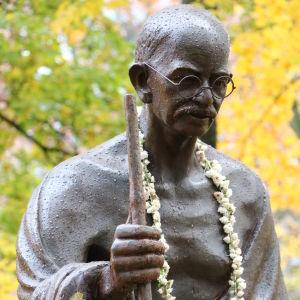 Statyn på Mahatma Gandhi, har en blomkrans runt halsen, regndroppar på statyn, träd med gula löv i bakgrunden.