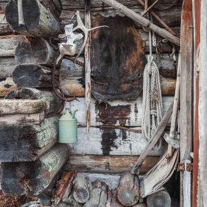 Kelohongista tehdyn mökin ulkoseinällä roikkuu eläimen nahka, sarvet ja työkaluja.