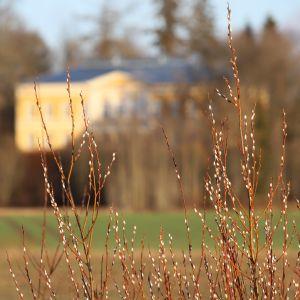 Kymenlaaksossa pellon laidalla kasvaa pajunkissoja.