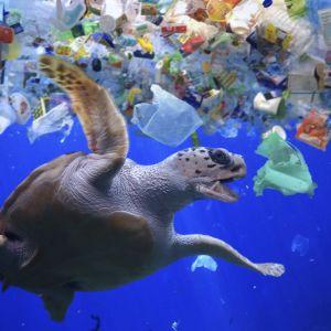 En sköldpadda i ett hav av plast