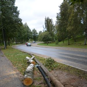 Omkullblåst träd i Vasa.