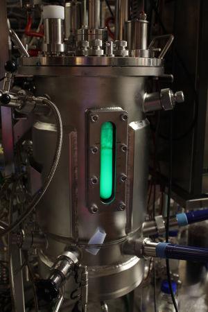 bioreaktori jossa kasvaa vihreänä fluoresoivaa proteiinia