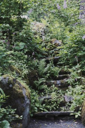 Sammalten peittämät kiviportaat metsässä, ympärillä rehevää vihreää kasvillisuutta.
