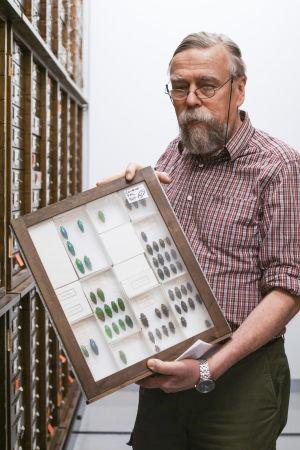 Olof Biström, skalbaggsforskare, visar upp baggar i Naturhistoriska museets samling i Helsingfors.