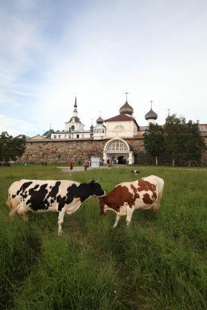 Toimittaja Arvo Tuominen kiertää dokumentissaan Vienan paikkakuntia ja historiallisia alueita.