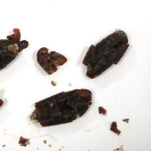 Gun-Britt hittade på villan dessa bruna avföringsliknande ca 1cm x 1mm stora saker. Något vitt mjölkaktigt kommer ut då man klämmer sönder dem. Vad är de?
