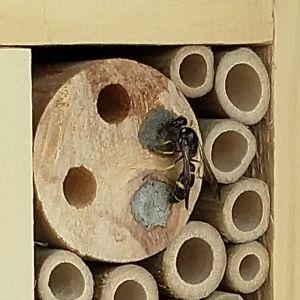 Tre bilder på insektshotell varav en med insekt.