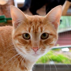Katt i katthuset i Lovisa.